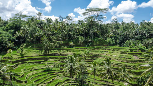 Photo overlooking Balinese rice fields